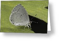 A Summer Azure Lights On A Leaf Greeting Card by George Grall