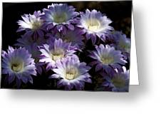 A Touch Of Lavender Greeting Card by Saija  Lehtonen