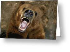 A Trained Kodiak Bear With Its Mouth Greeting Card by Joel Sartore