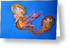 A Trio of Jellyfish Greeting Card by Kristin Elmquist