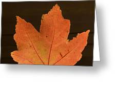 A Vibrant Colored Leaf Greeting Card by Joel Sartore
