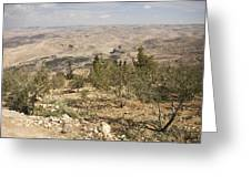 A View Of Olive Trees And Moses Greeting Card by Taylor S. Kennedy