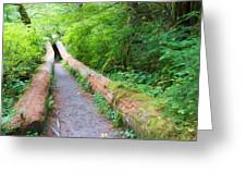 A Well Marked Path Greeting Card by Heidi Smith