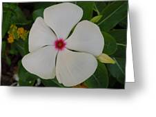 A White Star With A Red Center Greeting Card by Chad and Stacey Hall