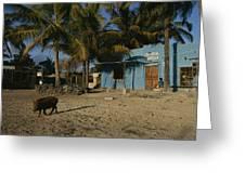 A Wild Boar Wanders Through A Village Greeting Card by Steve Winter