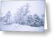 A Winter Landscape Of Snow-covered Greeting Card by Rich Reid