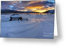 A Winter Sunset Over Tjeldsundet Greeting Card by Arild Heitmann