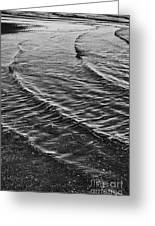 Abstract Waves - Black And White Greeting Card by Hideaki Sakurai