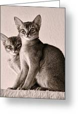 Abyssinian Kittens Greeting Card by Ari Salmela