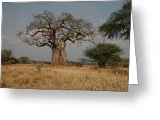 African Baobab Tree In The Tarangire Greeting Card by Gina Martin