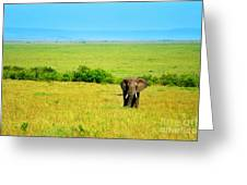 African Elephant in the wild Greeting Card by Anna Omelchenko