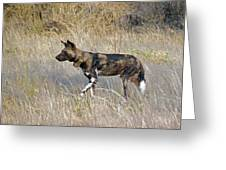 African Wild Dog Greeting Card by Tony Murtagh