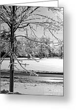 After The Ice Storm Greeting Card by Lila Fisher-Wenzel