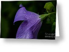 After The Rain Greeting Card by Tim Grimmel
