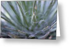 Agave Greeting Card by Marcio Faustino