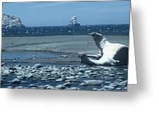 Ahoy Greeting Card by Alcina Morello