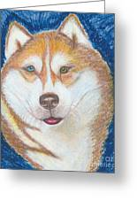 Alek The Siberian Husky Greeting Card by Ania M Milo