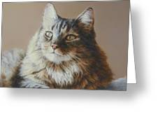 Alexi Maine Coon Greeting Card by Barbara Groff