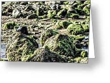 Algae Rocks Greeting Card by Arya Swadharma