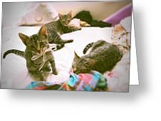 All 3 Kittens Together Greeting Card by Gemma Geluz