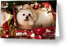 All Wrapped Up Greeting Card by Leslie Leda