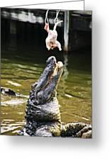 Alligator Feeding Greeting Card by Garry Gay