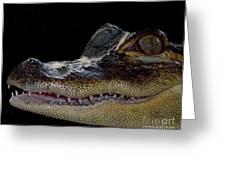 Alligator Portrait Greeting Card by Merton Allen