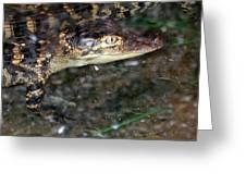 Alligator Greeting Card by Suhas Tavkar