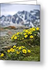 Alpine Meadow  Greeting Card by Elena Elisseeva