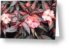 Amazing Hues Of Nature Greeting Card by Sonali Gangane