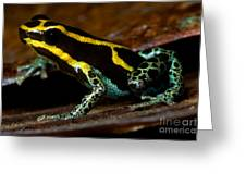 Amazonian Poison Frog Greeting Card by Dant� Fenolio
