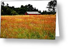 Amber Waves Greeting Card by Kevin D Davis