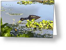 American Alligator Emerges Greeting Card by Ellie Teramoto