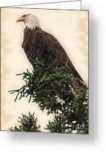 American Bald Eagle In Tree Greeting Card by Dan Friend