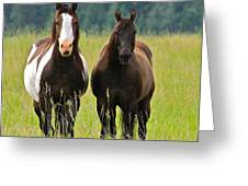 American Paint Stallion And Mare Greeting Card by Karon Melillo DeVega