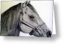 American Quarter Horse Greeting Card by Gary Stull