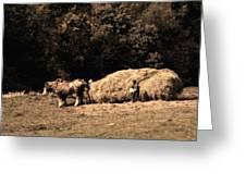 Amish Hay Wagon Greeting Card by Tom Mc Nemar