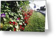Amish Horse And Buggy On Flowered Country Road Greeting Card by Jeremy Woodhouse