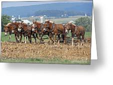 Amish Working Team  Greeting Card by Louise Peardon