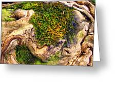 Among The Tree Roots Greeting Card by Todd A Blanchard