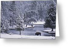 An American Bison Alongside A River Greeting Card by Michael Melford