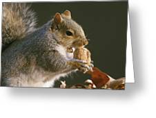 An Eastern Gray Squirrel Sciurus Greeting Card by Chris Johns