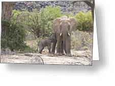 An Elephant Feeding Her Newborn Calf Greeting Card by Michael Poliza