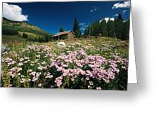 An Old Miners Cabin With Purple Asters Greeting Card by Richard Nowitz
