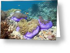 Anemones With Anemonefish Greeting Card by Georgette Douwma