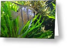 Angel Fish Greeting Card by Tanya Moody