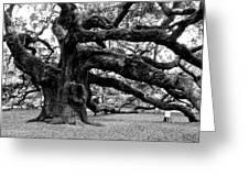 Angel Oak Tree 2009 Black And White Greeting Card by Louis Dallara