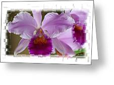 Angel Wings Orchid Greeting Card by Madeline  Allen - SmudgeArt