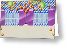 Angina Treatment: Calcium Antagonist Mechanism Greeting Card by John Bavosi