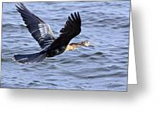 Anhinga In Flight Greeting Card by Roger Wedegis